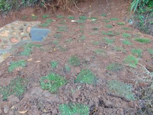 The Water Project:  Grass Planting Progress