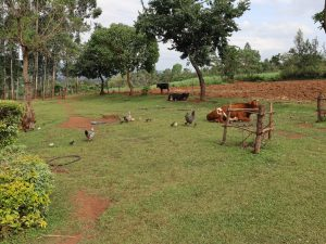 The Water Project:  Animals Grazing In Open Field