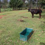 The Water Project: Harambee Community, Elijah Kwalanda Spring -  Animal Drinking Point