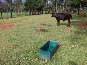 The Water Project:  Animal Drinking Point