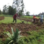 The Water Project: Mahira Community, Kusimba Spring -  Using Cows To Till Land