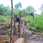The Water Project: Chepnonochi Community, Shikati Spring -  Fencing
