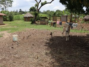 The Water Project:  A Cow In The Shade