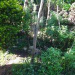 The Water Project: Mahira Community, Jairus Mwera Spring -  Bathing Shelter