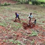 The Water Project: Harambee Community, Elijah Kwalanda Spring -  Kids Helping Dig For Sweet Potatoes