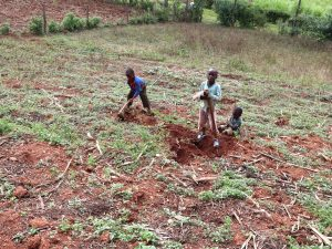 The Water Project:  Kids Helping Dig For Sweet Potatoes