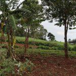 The Water Project: Harambee Community, Elijah Kwalanda Spring -  Community Farms