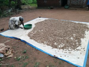 The Water Project:  Drying Beans And Groundnuts