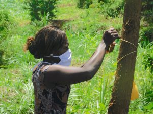 The Water Project:  Trainer Lynnah Ties The Leaky Tin To A Tree