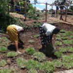 The Water Project: Mahira Community, Jairus Mwera Spring -  Grass Planting