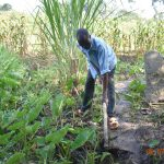 The Water Project: Munenga Community, Burudi Spring -  Silas Works On His Yam Project Fed By Burudi Spring Water