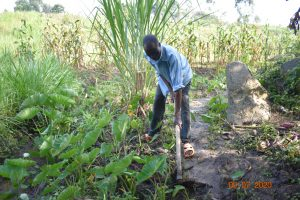 The Water Project:  Silas Works On His Yam Project Fed By Burudi Spring Water