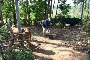The Water Project:  David Kweyu Quenching His Animals Thirst With Water From Kweyu Spring