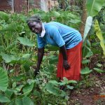 The Water Project: Ataku Community, Ngache Spring -  Catherine In Her Kitchen Garden
