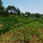 The Water Project: Mukhweso Community, Shemema Spring -  Agricultural Landscape