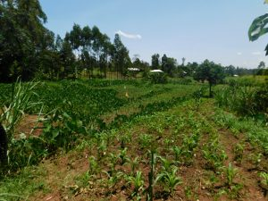 The Water Project:  Agricultural Landscape