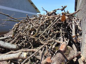 The Water Project:  Firewood For Kitchen Use