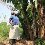 The Water Project: Shihingo Community, Mulambala Spring -  Margaret Checks Her Bananas