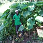 The Water Project: Mahira Community, Kusimba Spring -  Mr Kusimba At His Yam Farm
