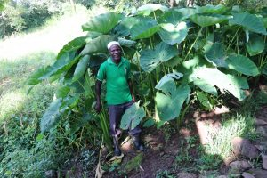 The Water Project:  Mr Kusimba At His Yam Farm
