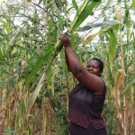 The Water Project: Shitaho Community B, Isaac Spring -  Ms Makanji Checking To See If Her Maize Is Ready