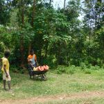 The Water Project: Emutetemo Community, Lubale Spring -  Once Over The Hill Using A Wheelbarrow To Carry Water Home
