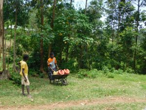 The Water Project:  Once Over The Hill Using A Wheelbarrow To Carry Water Home