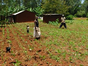 The Water Project:  Farming Is The Major Activity