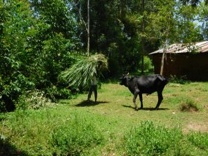 The Water Project:  Some Food For The Livestock