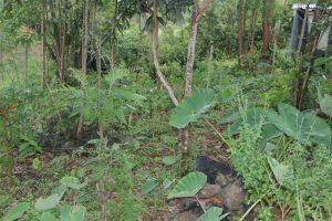 The Water Project:  A Backyard Farm