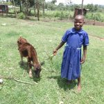 The Water Project: Mahira Community, Anunda Spring -  Brilliant Feeds One Of Her Animals At Home