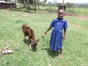 The Water Project:  Brilliant Feeds One Of Her Animals At Home