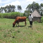The Water Project: Shihome Community, Peter Majoni Spring -  Aron Kwemba Grazing His Cow