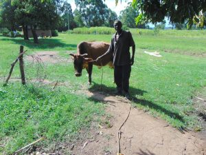 The Water Project:  A Community Member Grazing His Cow