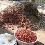 The Water Project: Lokomasama, Rotain Village -  Palm Kernel