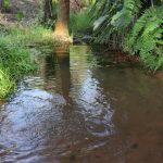 The Water Project: Lokomasama, Rotain Village -  Water Source