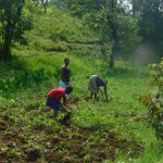The Water Project: Maraba Community, Nambwaya Spring -  Farming The Major Activity