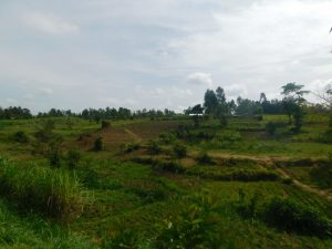 The Water Project:  Landscape Around Nambwaya Spring