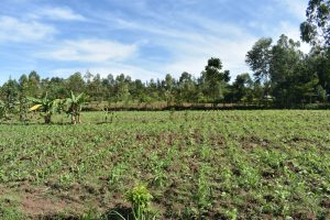 The Water Project:  Landscape Around Muluinga Spring