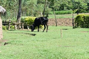 The Water Project:  Livestock Keeping Is A Major Activity