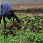 The Water Project: Bukalama Community, Wanzetse Spring -  Farming The Major Activity