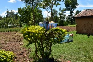The Water Project:  Live Bush And Bin As