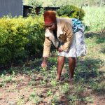 The Water Project: Bukhaywa Community, Ashikhanga Spring -  Weeding In Her Farm