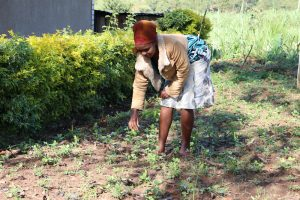 The Water Project:  Weeding In Her Farm
