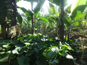 The Water Project:  Vegetable Farm