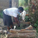 The Water Project: Mahira Community, Mukalama Spring -  Feeding A Calf