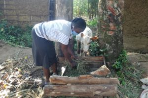 The Water Project:  Feeding A Calf