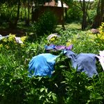 The Water Project: Shianda Township Community, Olingo Spring -  Clothes Drying On Bushes
