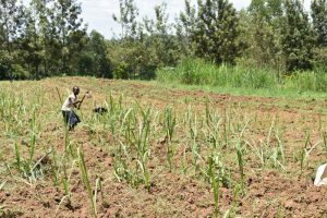 The Water Project:  Farming Is The Main Activity
