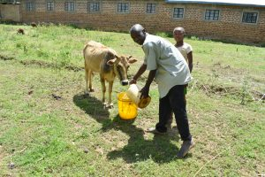 The Water Project:  Watering His Cow